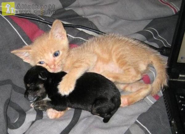 Kiskutya, mentett cicával