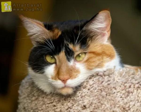Cica, fázik