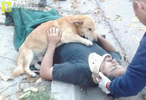 Kutya, az ember önzetlen barátja