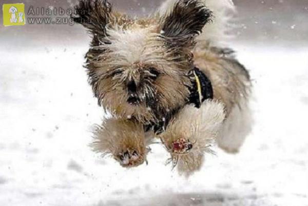 Kutyajáték, téli pillanatok