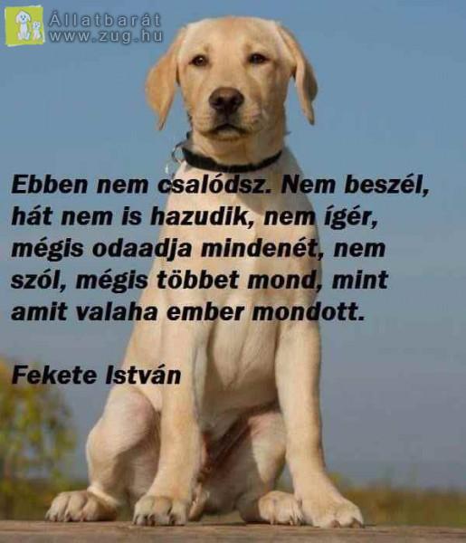 A kutya a legjobb barát
