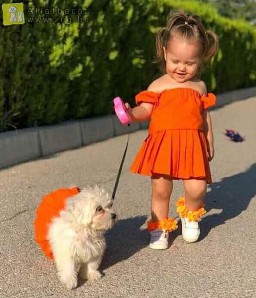 Kutyasétáltatás a kis gazdival
