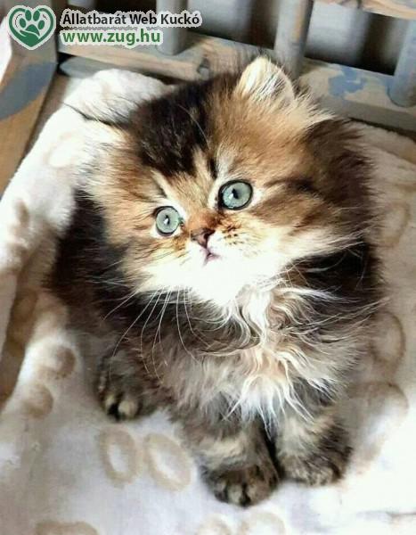 Tetszik - szép cica