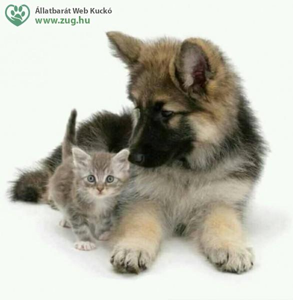 Kutya - macska barátság