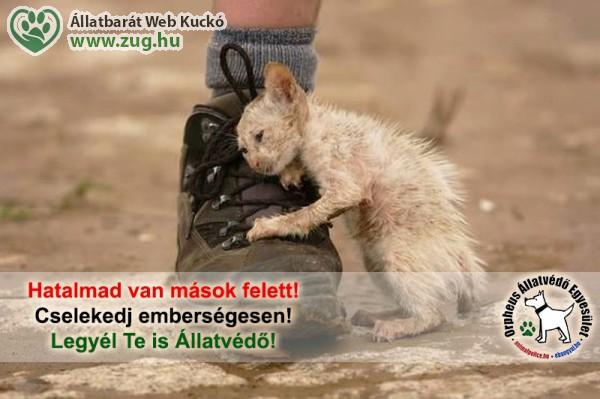Állatvédő