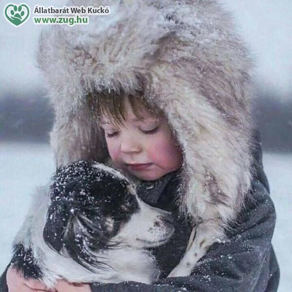 Kutya tél, kutyahideg
