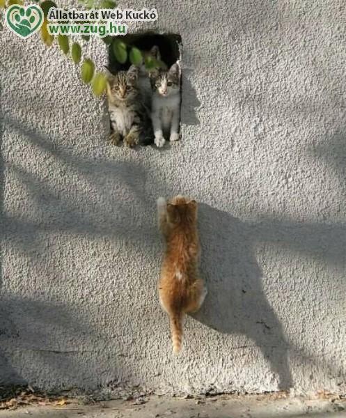Cicák fel a fal-ra