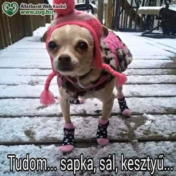 Kutyacipő, kutyaruha