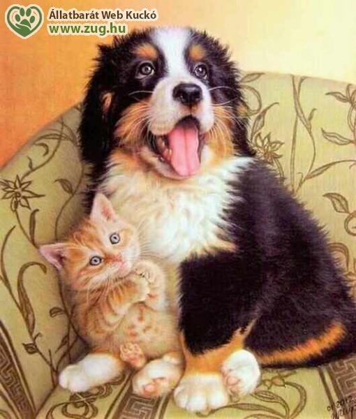Állatbarátkozás