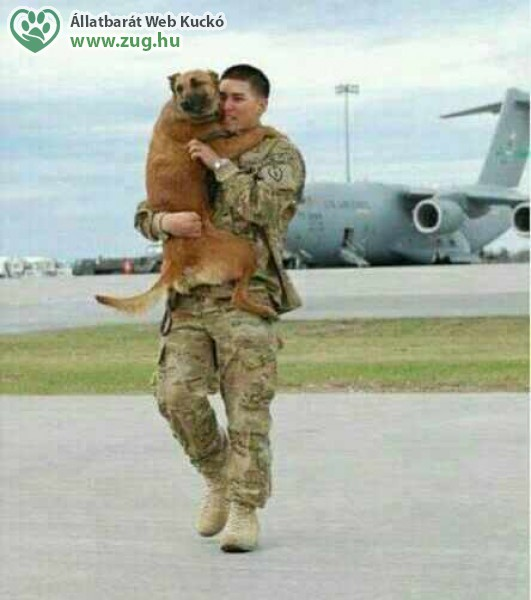 Katona kutya