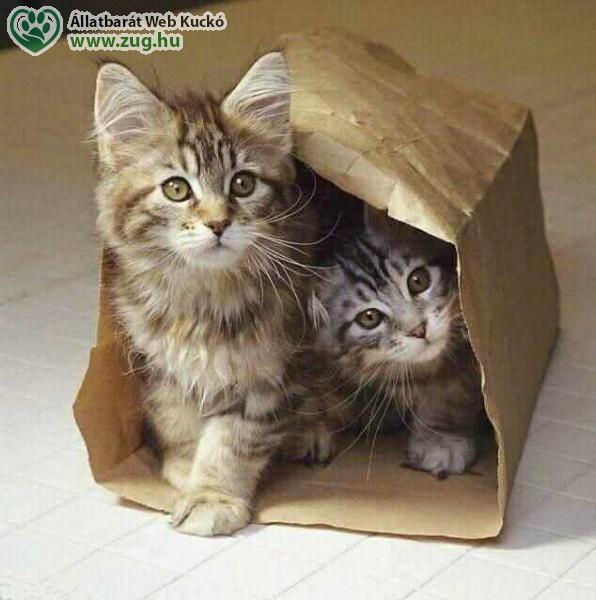 Kölyök macskák