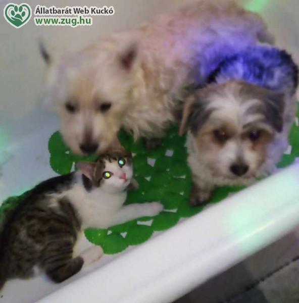 Kutyák és cica - fürdetés előtt