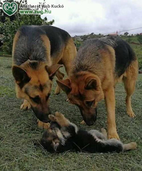 Kutya szülők