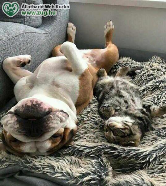 Szoba cica, szoba kutya