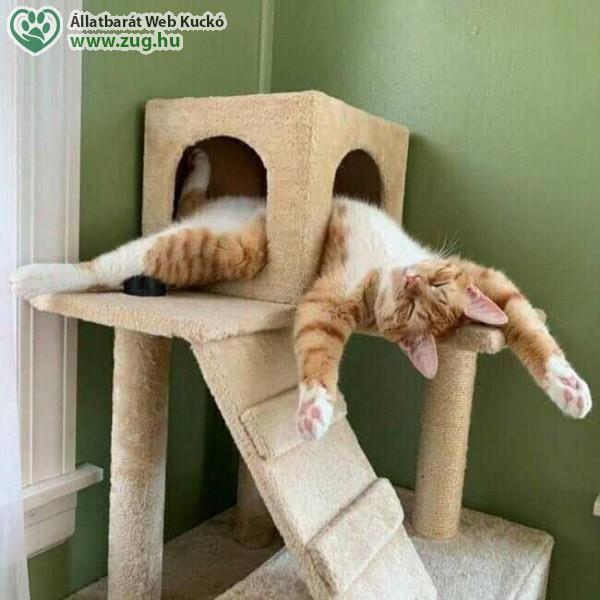 Macskajáték