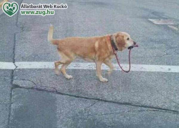 Önsétáltató kutya