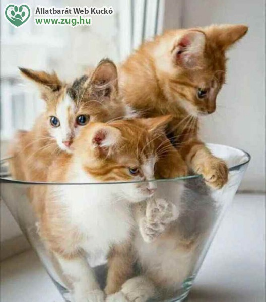 Vörös cicák