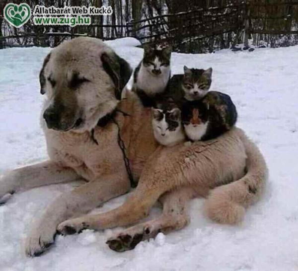 Fázós cicák
