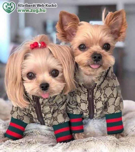 Kutyaruha divat