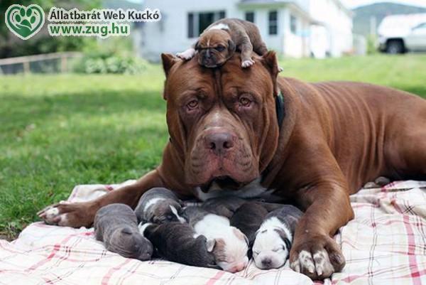 Kölyök kutyusok