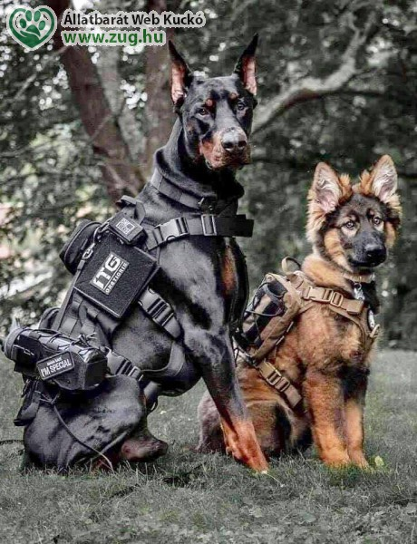 Harcos kutyák