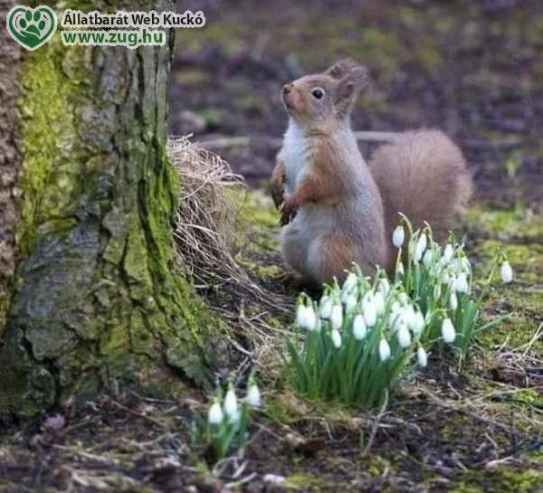 Hóvirág, erdő, tavasz