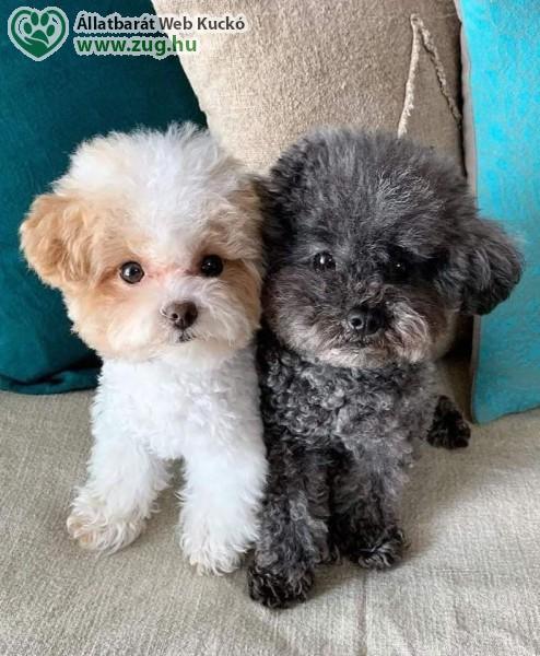 Kutya pár