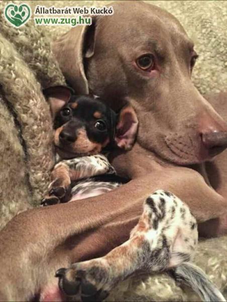 Legjobb barátok, kutya barátság