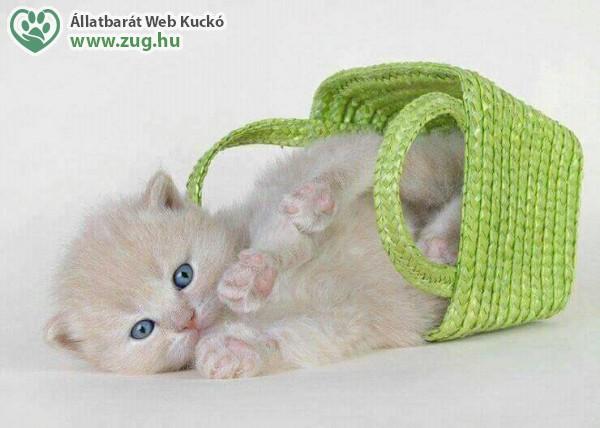 Egy zsák cica