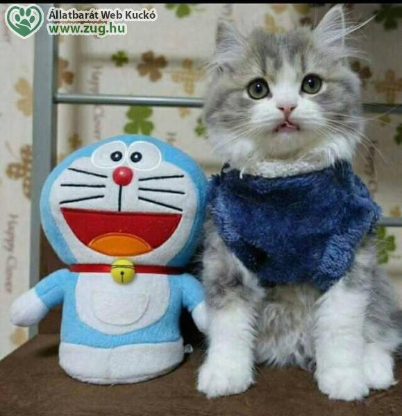 Cica cicával