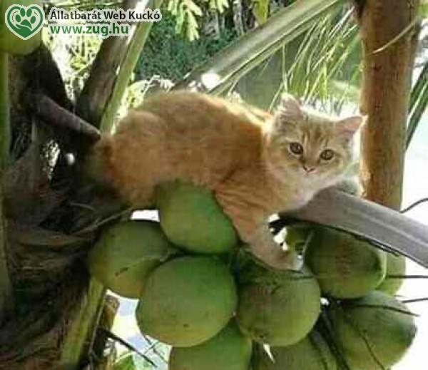 Citrom, cica