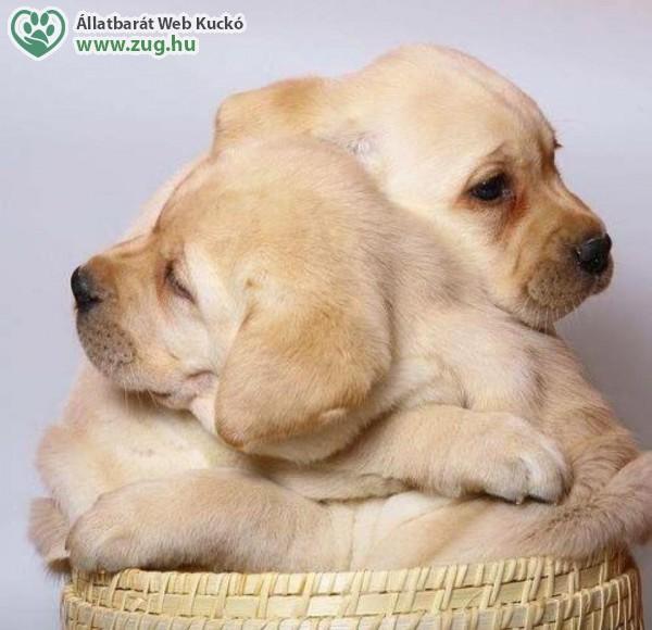 Kutyatestvérek