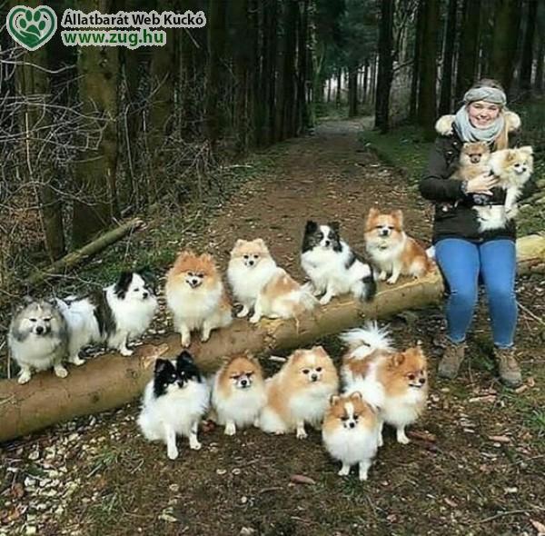 Kutyás család