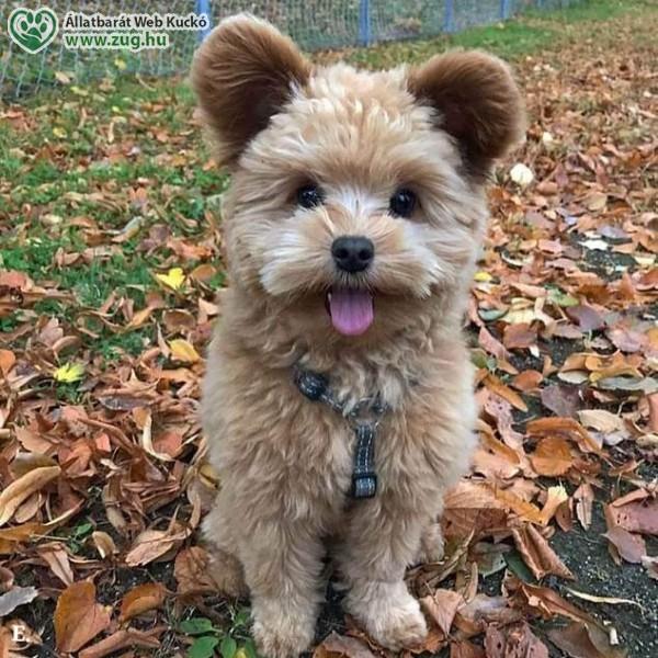 Kicsi Benji