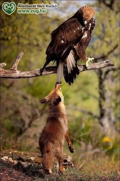 A vadon ragadozói