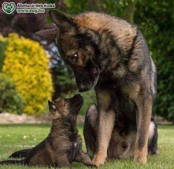 Anya kutya, kölyök