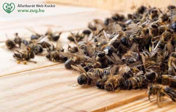 Elhullott méhek, permetszertől