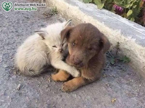 Kóbor, kidobott kutya, cica