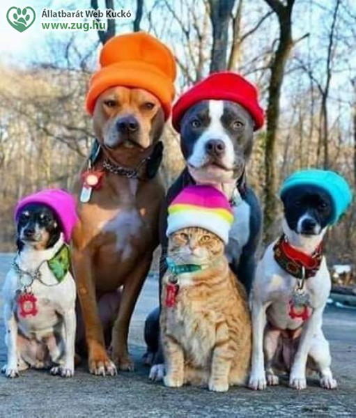 Téli kutyák