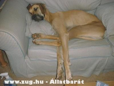 Álmos vagyok, kicsi az ágy!