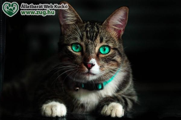 Smaragdzöld szemű cica