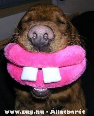 Vicces kutyajáték