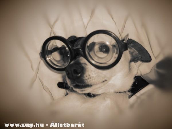 Szemüveget a kutyának!