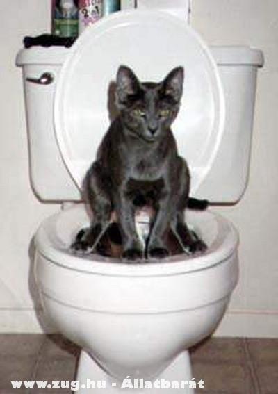 Macska összkomfort