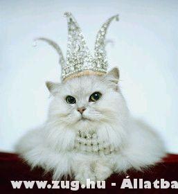 macskák helye az életünkben :) Ugye?