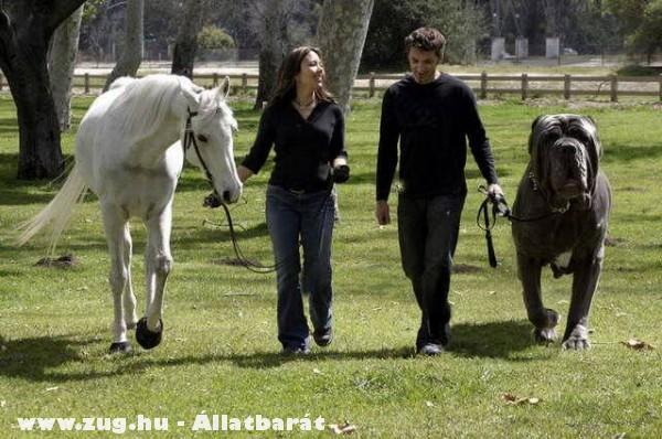 Na te melyiken lovagolnál? :P