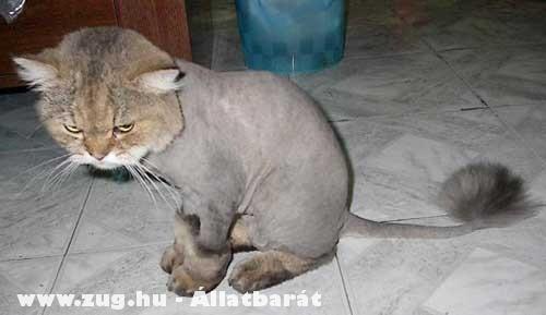 Nyári macskafazon :D