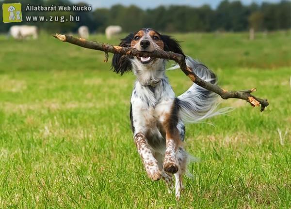 A Te kutyád szeret botozni?!