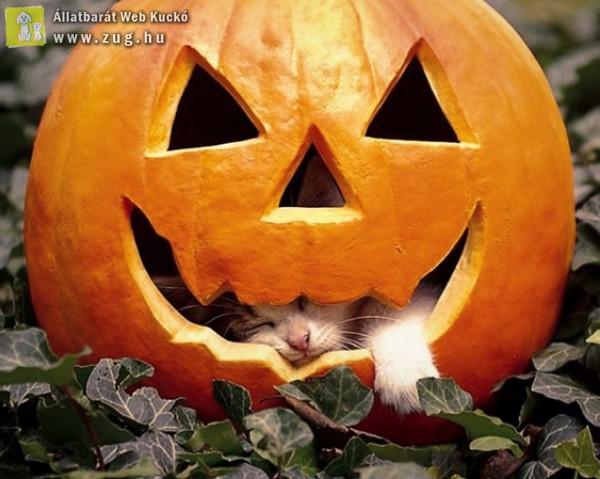 Aki bealudta Halloween-t :)