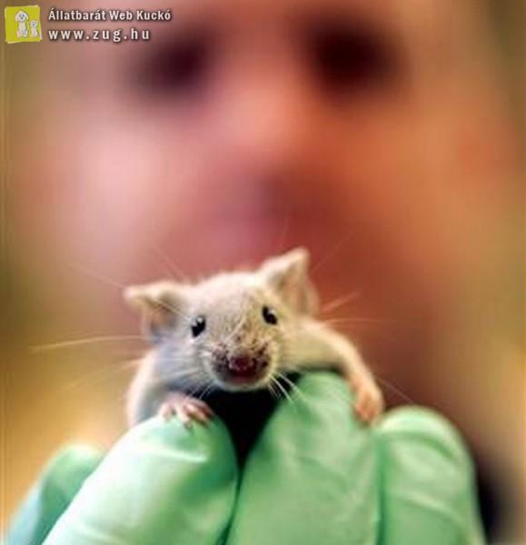 Állatkísérlet - tesztalany